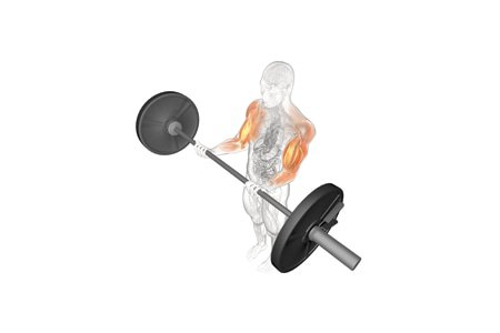 Barbell Workout