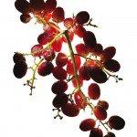 grape, healthy eating, nutrition, best foods for men