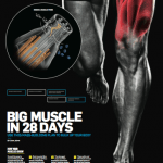big muscle