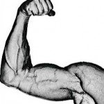 increase muscle