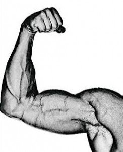 muscle2