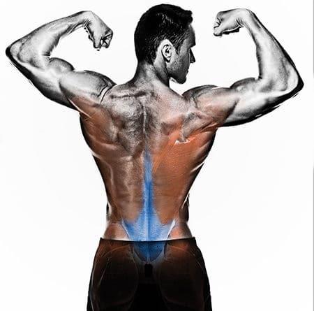 v-shape torso