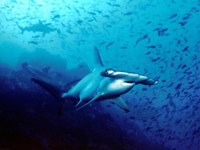 scuba, diving, ocean