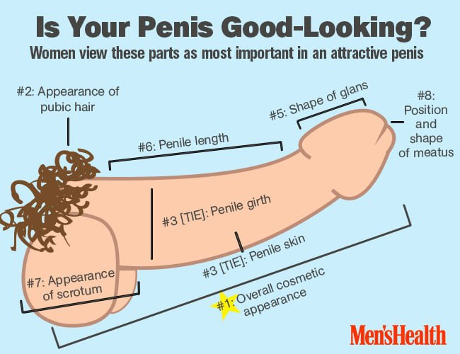 attractive-penis-infographic_0