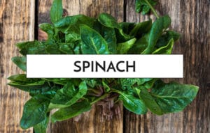 11-foods-that-speed-up-your-metabolism-ss4
