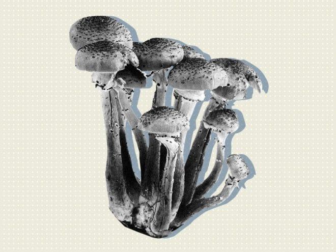 mushroom-safest-recreational-drug
