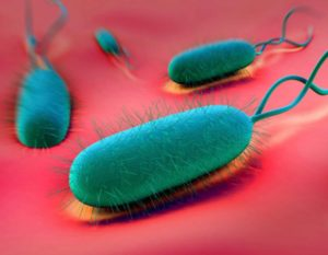 4-bacteria