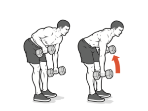 arms workout dumbbell rows