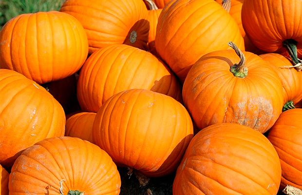 pumpkins contain vitamin c